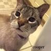Coopercat