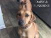 Daisy:Sunshine