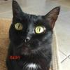 Baileycat